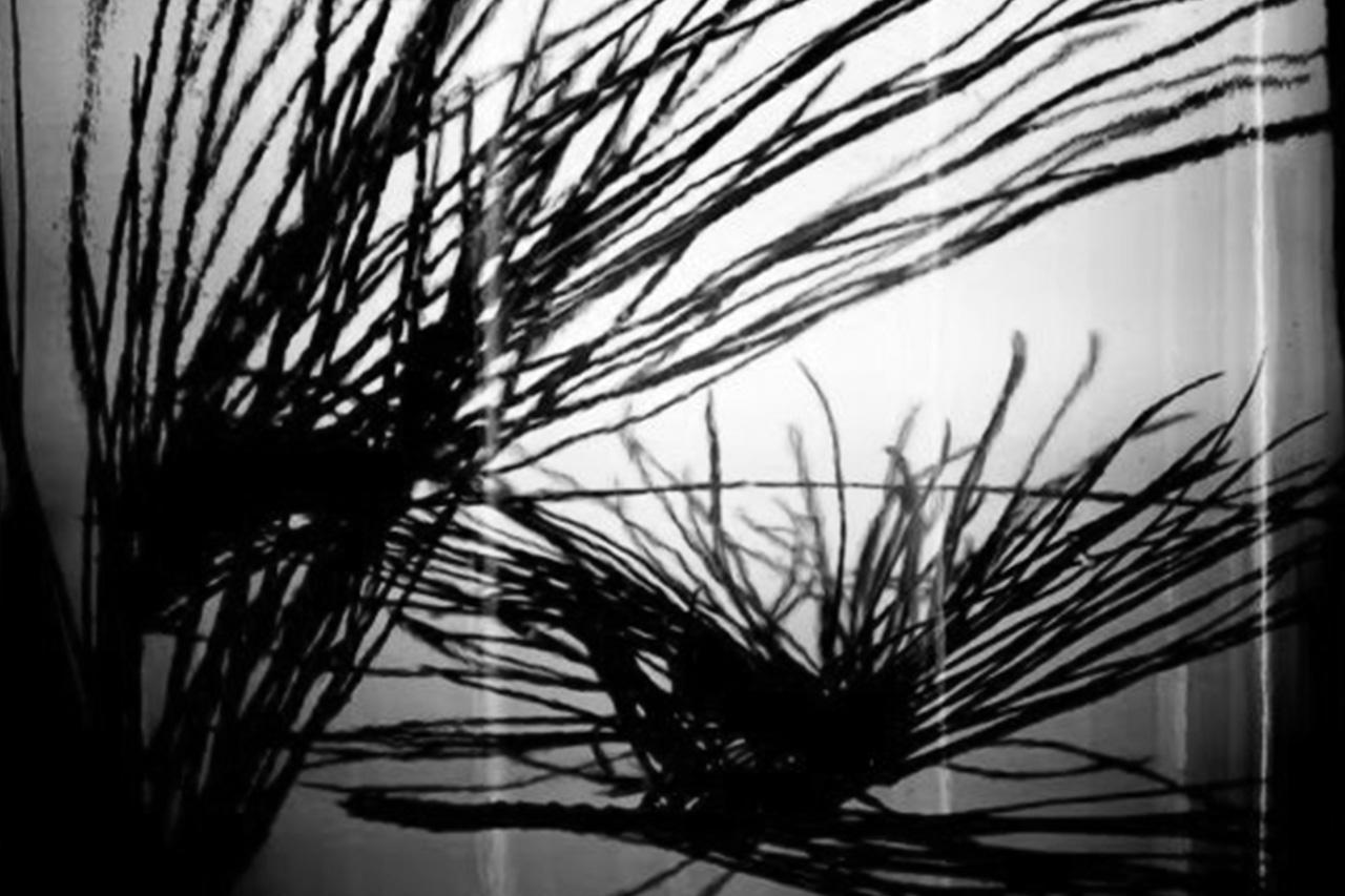 KORRES & INGREDIENTS: BLACK PINE